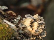 Macro Photo Of Woodland Mushrooms