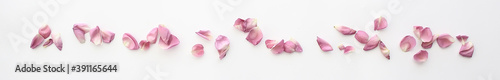 Fotografia petals flowers frame / petals of red flowers on a white background isolated
