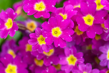 Beautiful Flowers. Close-up Of...