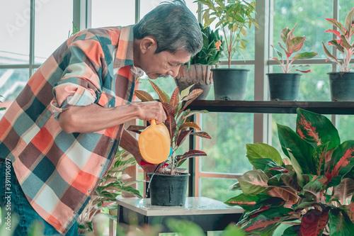 Fototapeta Senior Asian man is watering houseplant in his home gardening small business plant workshop. obraz