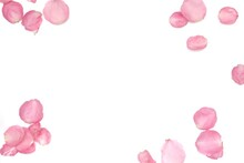 Blurred A Group Of Sweet Pink Rose Corollas On White Isolated With Copy Space And Softy Style