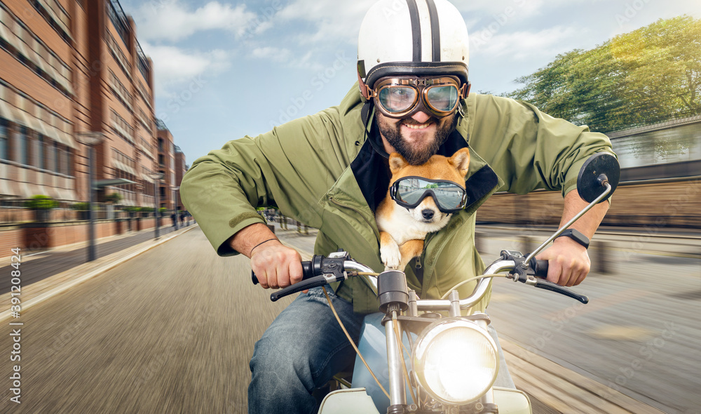 Fototapeta Man and his dog riding a motorcycle in the city