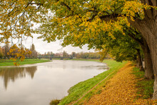 River Bank With Trees With Yel...