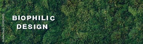 Fotografía Biophilic design - white letters on green moss, grass background