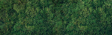 Natural Green Moss Background. Top View. Copy Space. Biophilic Design. Organic, Wild Nature Concept. Banner.