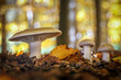 canvas print picture - Mushrooms in amazing golden autumnal forest
