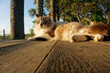 canvas print picture - Beautiful elegant cat sitting on a porch