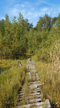 Old Wooden Hiking Trail Going ...