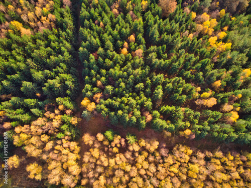 High angle aerial forest in autumn, directly above drone shot, green and yellow tree colors in fall