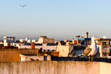 Fototapeta Na sufit - view of Essaouira City of Morocco Africa