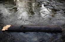 Un Arbre Mort Dans La Rivière