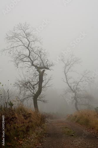 Drzewa bez liści we mgle - fototapety na wymiar