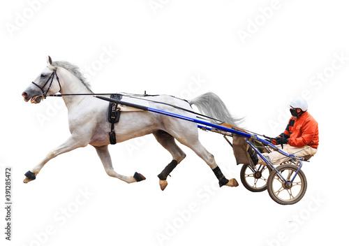 Obraz na plátně horse racing with jockeys racetrack stallions race the first winner of the race