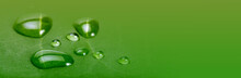 Soft Focus Green Leaf With Water Drops. Horizontal Long Nature Background.