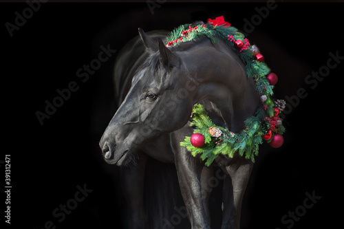 Fototapeta Black horse in christmas wreath. New Year and Christmas horse obraz