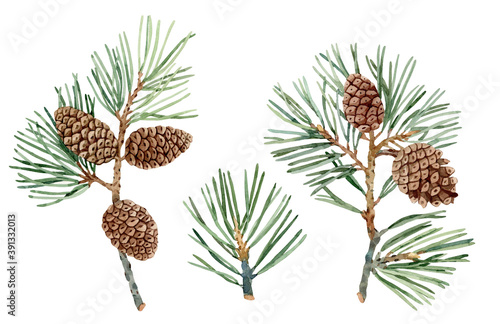 Papel de parede Collection of conifer hand drawn watercolor branches