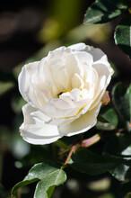 Closeup Of A Beautiful Blossom...
