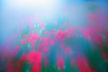 Field Of Red Poppies. Vaseline...