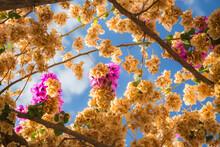 Ravello Trellis Florals