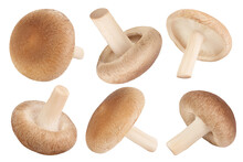 Fresh Shiitake Mushroom Isolat...