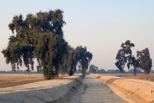 Empty Dry Irrigation Canal In A Cotton Field Outside Visalia, CA., 2005