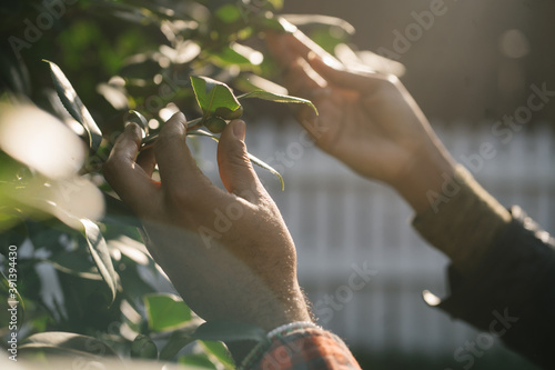 Black hands exploring nature and plants outdoors