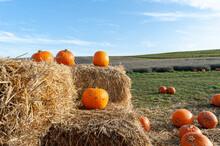Pumpkins On Straw Bales On Pum...