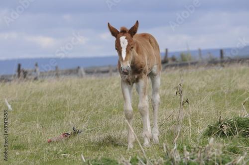 Slika na platnu foal