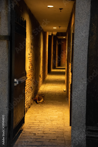Photo dimly lit alley