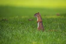 Closeup Shot Of A Small Squirr...