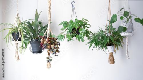 吊るし植物のハンギンググリーンがある室内 Canvas