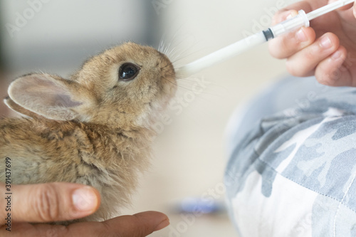 The baby rabbit was drinking milk from a syringe by the veterinary Fotobehang