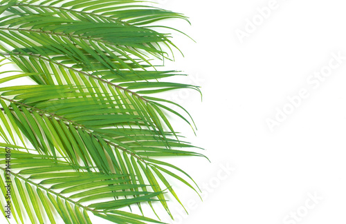 Photo Background of Green Palm Branches Isolated on a White Background