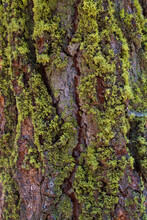 Texture Of A Mossy Tree Trunk