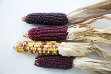 Closeup Of Colorful Corn On Is...