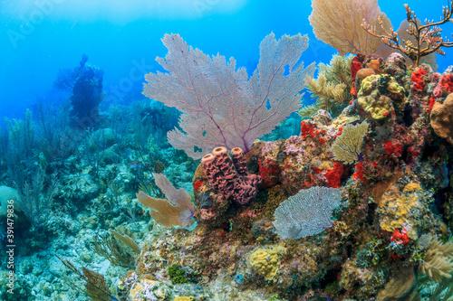 Papel de parede Caribbean coral garden