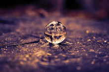 Lensball Laying On The Tree St...