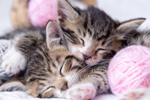 Two Striped Kittens Sleeping W...