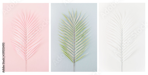 Canvas Print Palm leaves of various pastel colors