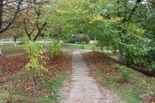 Path In A Autumn Park