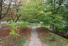 Path In A Autumn Park
