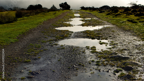 Wet moorland track with puddles, Cornwall Canvas Print
