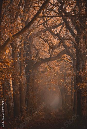 Jesienna aleja - fototapety na wymiar