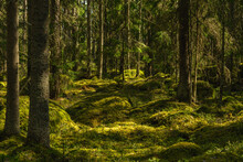 Deep In A Wild-grown Forest In...