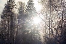 Ural Winter Landscape. Sunny F...
