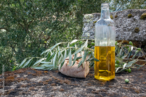 Fotografie, Obraz Olive oil in a bottle in nature with an olive branch and a rocky bottom