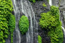 Banyumala Twin Falls