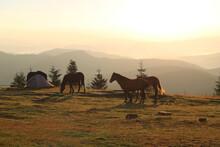 Mountain Landscape At Dawn, Th...