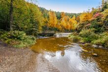 Natural Reserve Landscape With...
