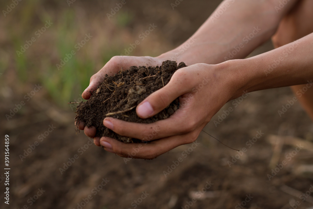 Fototapeta Hand of professional farmer hold soil from ground, examination of quality to prepare grow seedling of vegetable at organic farm.